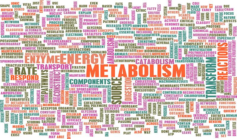 Secrets about Your Metabolism