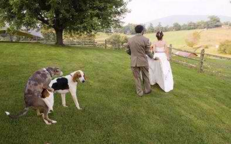 40 epic wedding photo fail grooms and brides should avoid